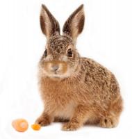 Что подарить зайцу?