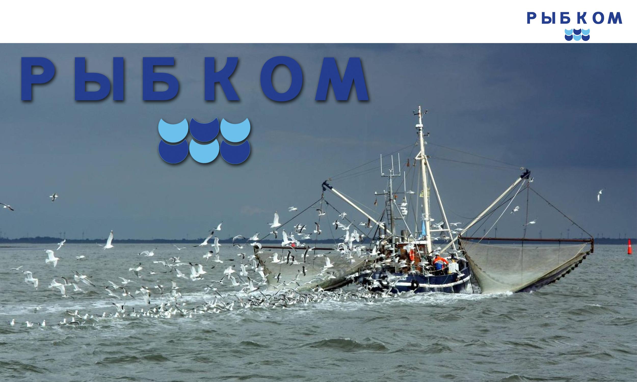 Создание логотипа и брэндбука для компании РЫБКОМ фото f_1175c091729c545e.jpg