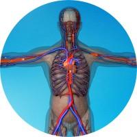 Визуализация кровообращения