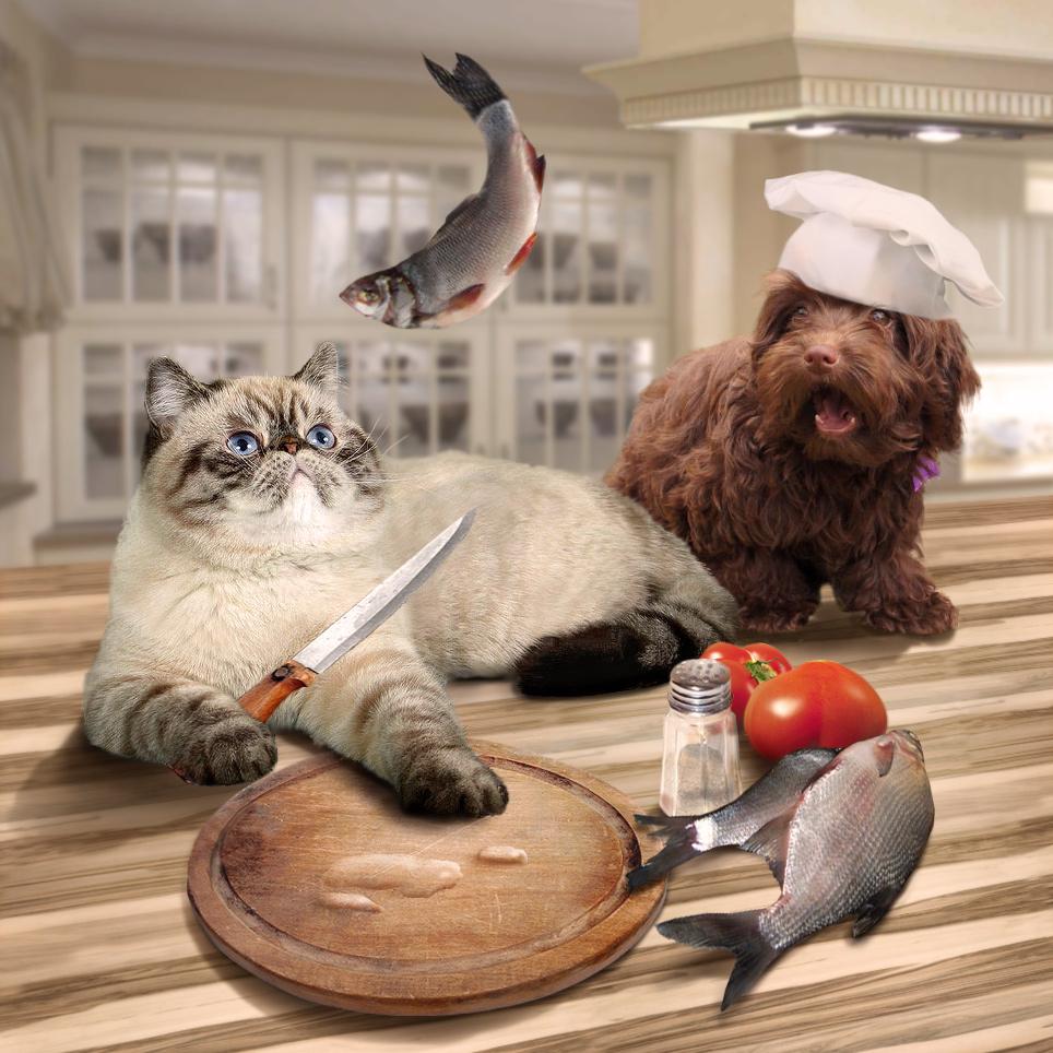 Создать интересный коллаж с участием животных фото f_83251d911ee119ff.jpg