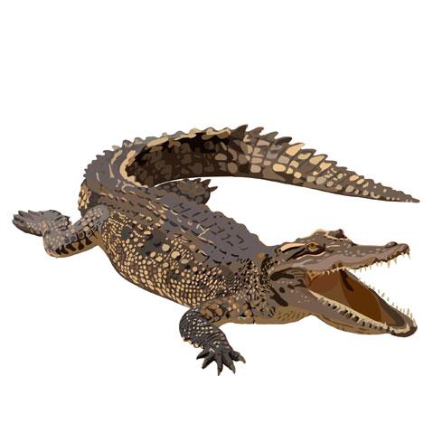 Картинка в приложение для детей — крокодил