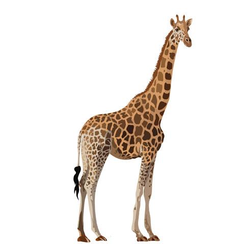 Картинка в приложение для детей — жираф