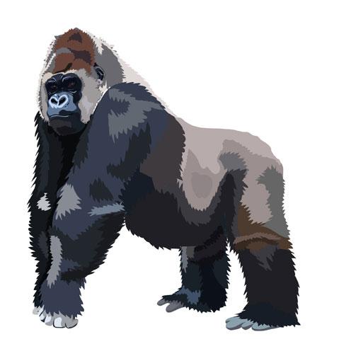 Картинка в приложение для детей — горилла