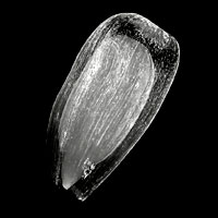 Рентгеновский микротомограф
