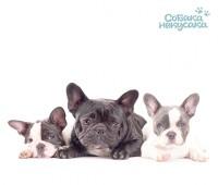 Портал продажи/покупки/вязки собак