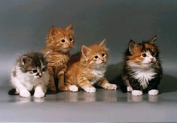 Подбор форумов о кошках