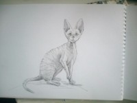 Рисование карандашом. Кошки породы Девон Рекс