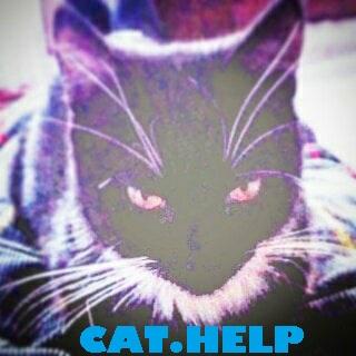 логотип для сайта и группы вк - cat.help фото f_09659dad9282505a.jpg
