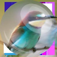 Hummingbird-russia (сайт под ключ)