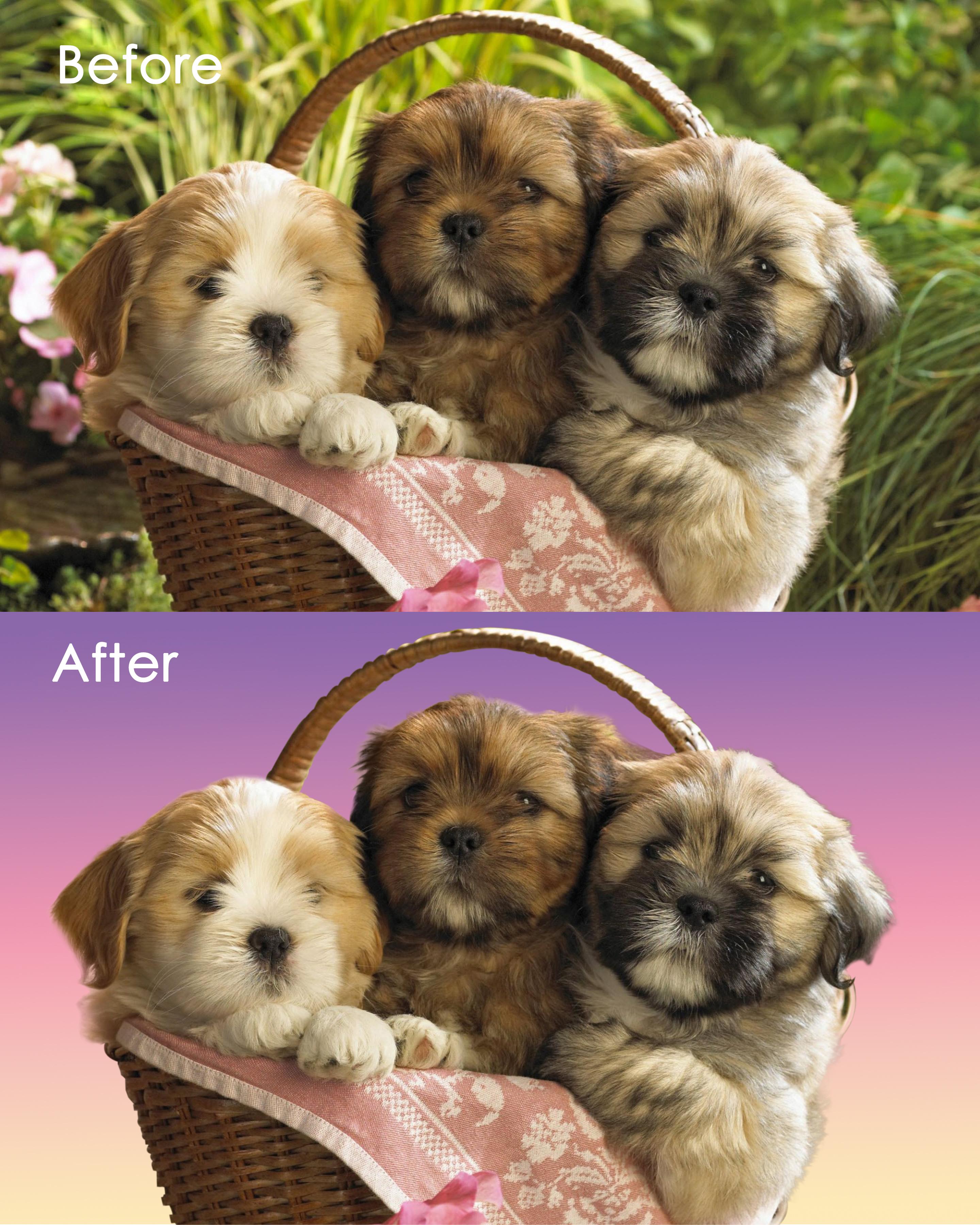 Обтравка с заменой фона - Корзина со щенками