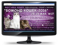 Баннер - Выставка кошек
