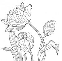 Тюльпан в векторе