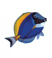 Рыба-хирург