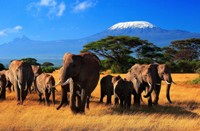 Кения. Туризм.