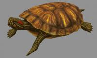 3D анимация. Черепаха.