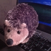 hedgehog-15