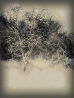 Стилизация под рисунок, зимний пейзаж