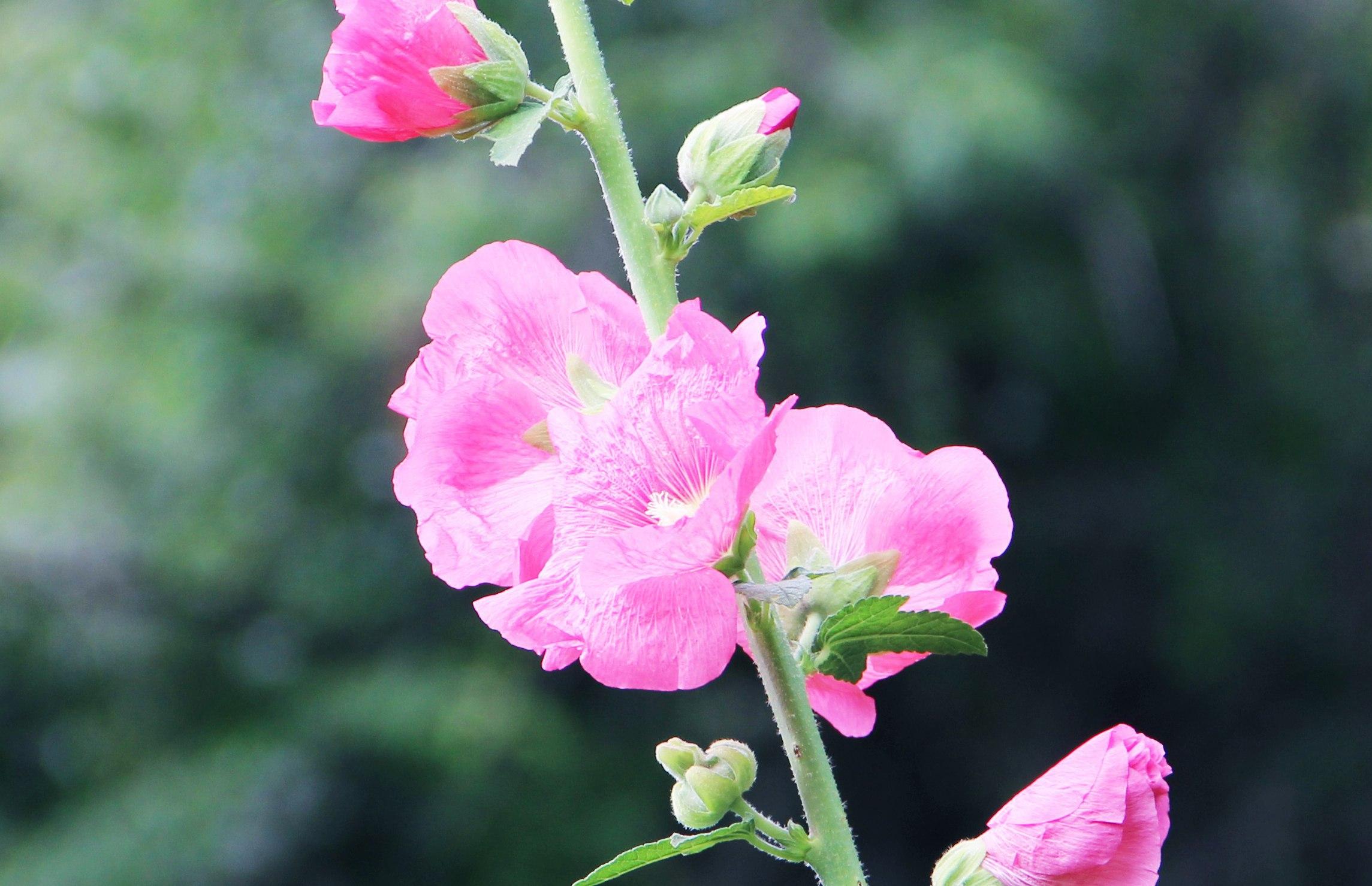 Фото: Макросъёмка, цветок