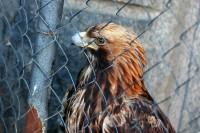 Фото: Орёл