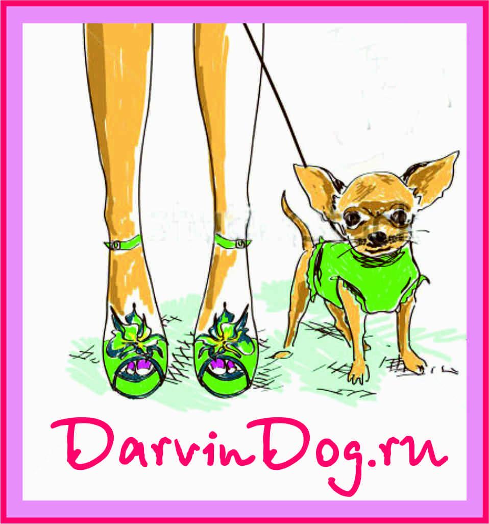 Создать логотип для интернет магазина одежды для собак фото f_35756519d99d3580.jpg