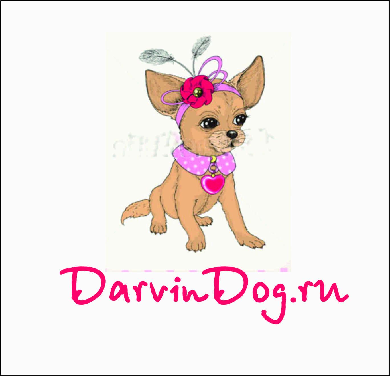 Создать логотип для интернет магазина одежды для собак фото f_60256519a078bab2.jpg
