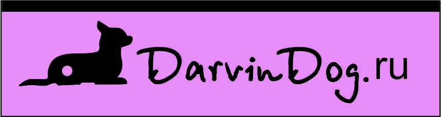 Создать логотип для интернет магазина одежды для собак фото f_87156518b0403093.jpg
