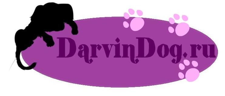 Создать логотип для интернет магазина одежды для собак фото f_727564a338ae3769.jpg