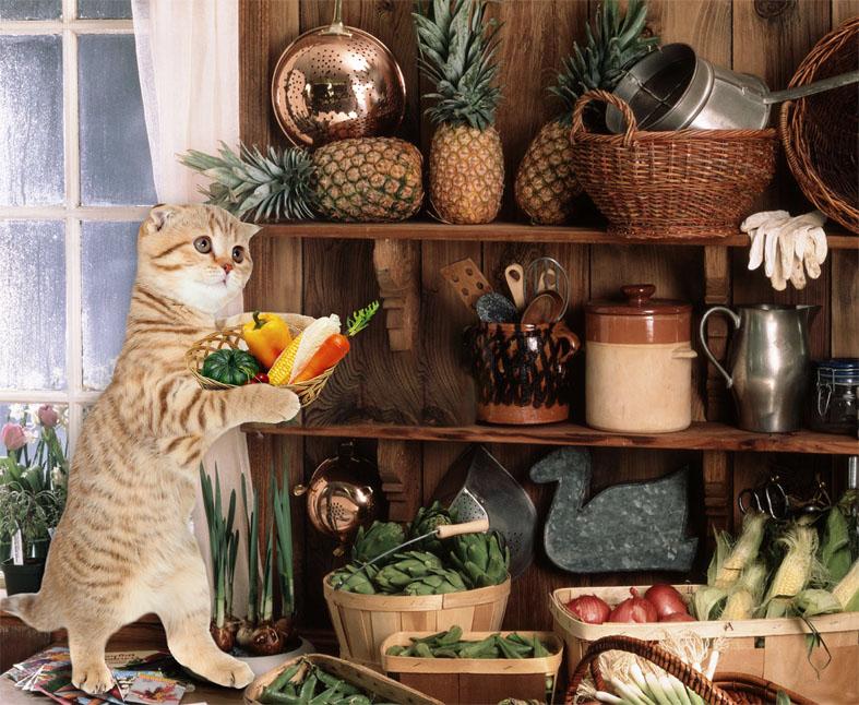Создать интересный коллаж с участием животных фото f_32751d7132c7f1cd.jpg