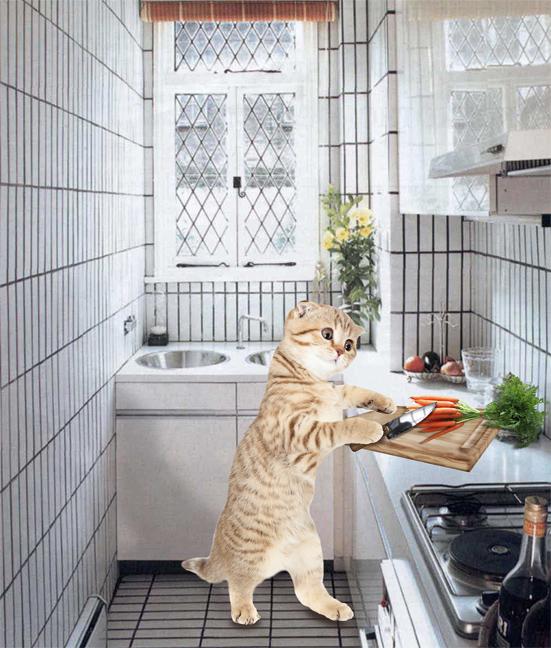 Создать интересный коллаж с участием животных фото f_38151d7d2234826c.jpg