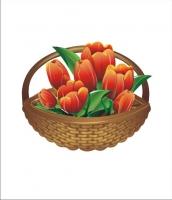Вектор. Тюльпаны
