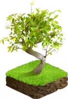 Дерево. Вектор+растр