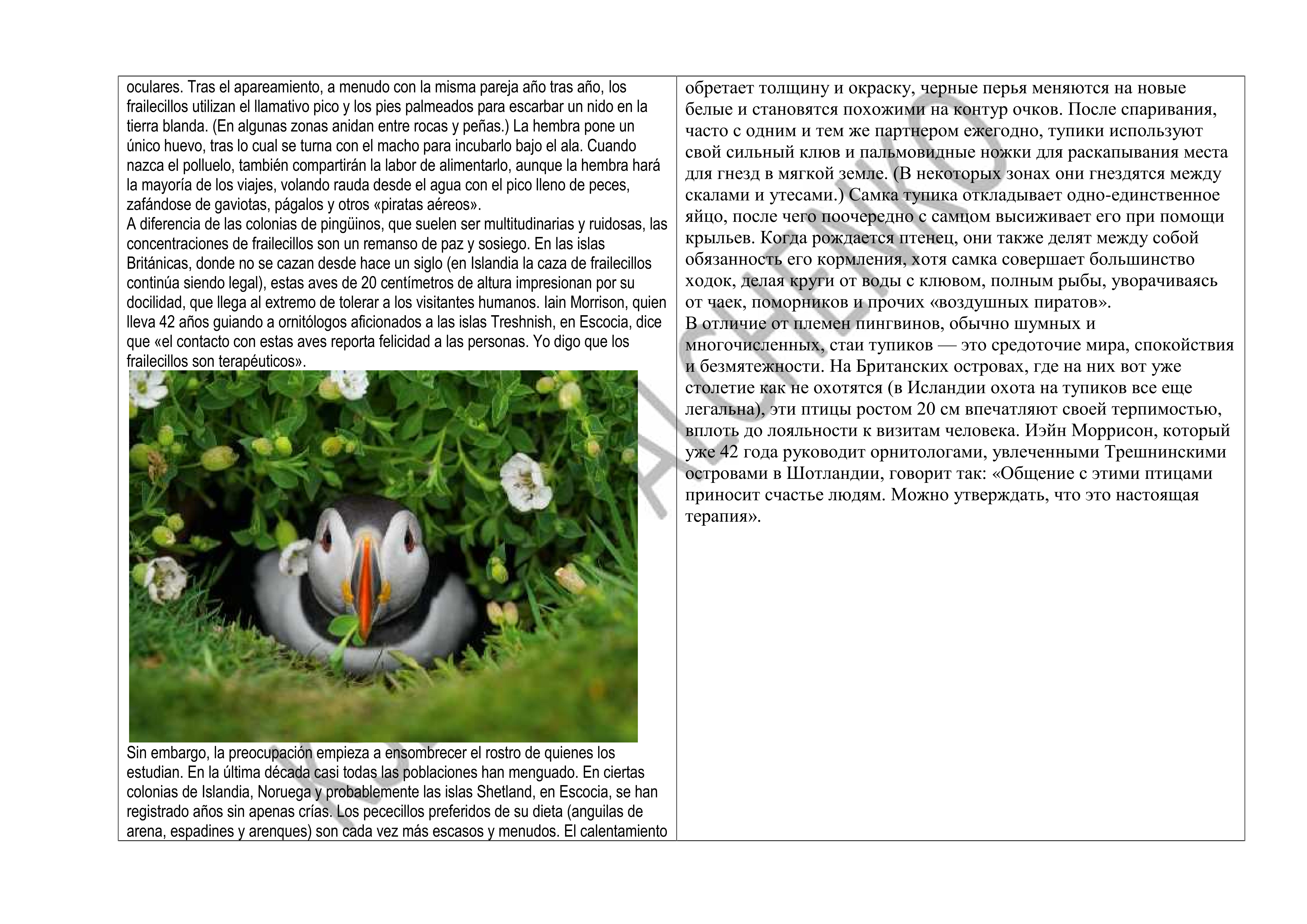 Испанский: перевод на русский, публицистика