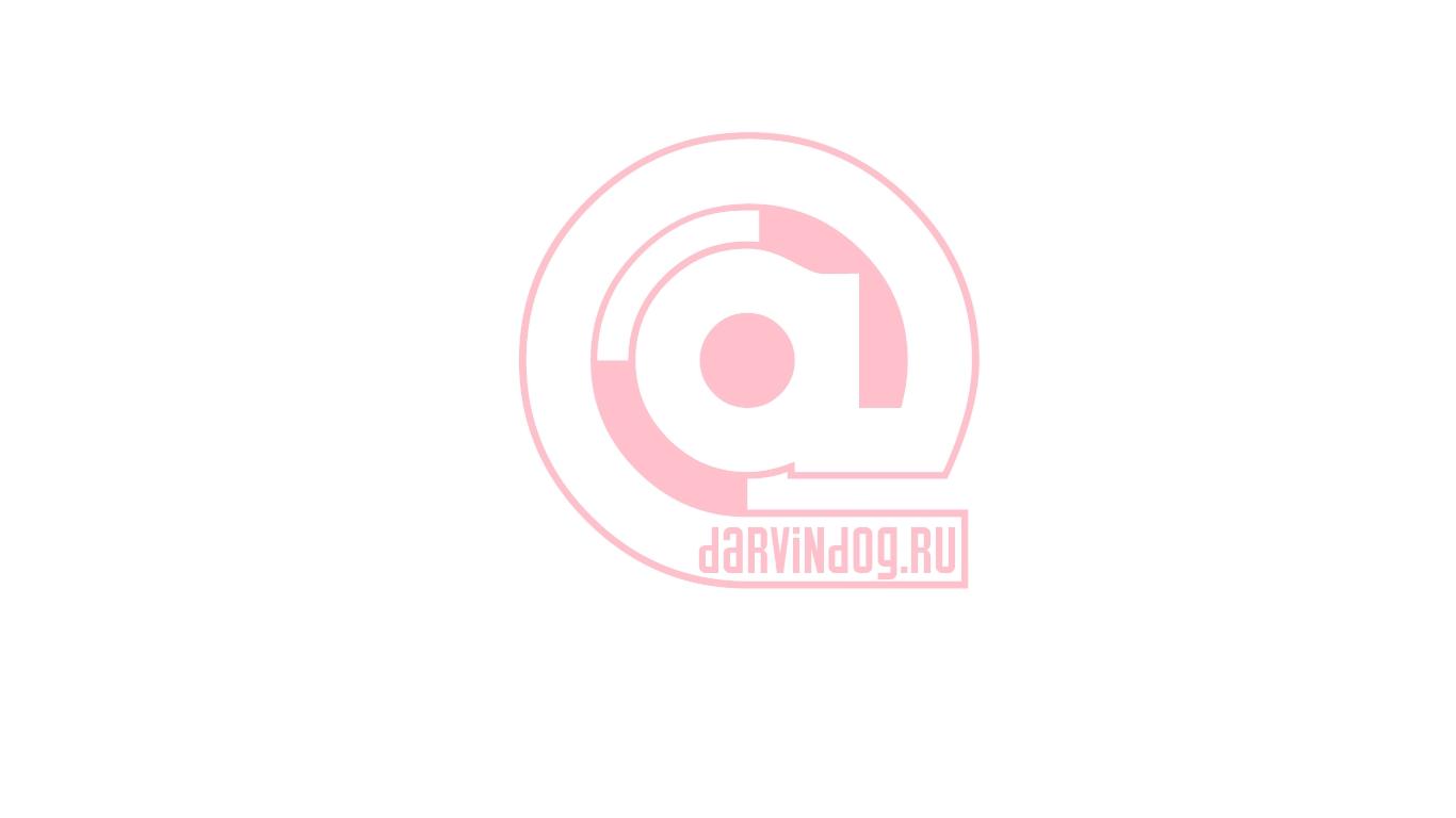 Создать логотип для интернет магазина одежды для собак фото f_5465650cd8d372eb.jpg