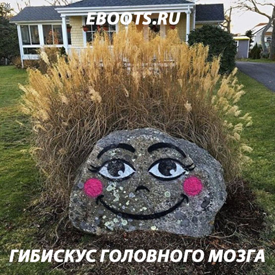 Создать мемы для магазина кроссовок Eboots, нативная реклама фото f_6945a5f84d959f2c.jpg