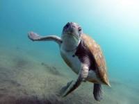 Тенерифе - Сноркелинг с черепахами