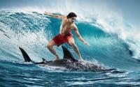 Акулы – несменные борцы с сёрферами