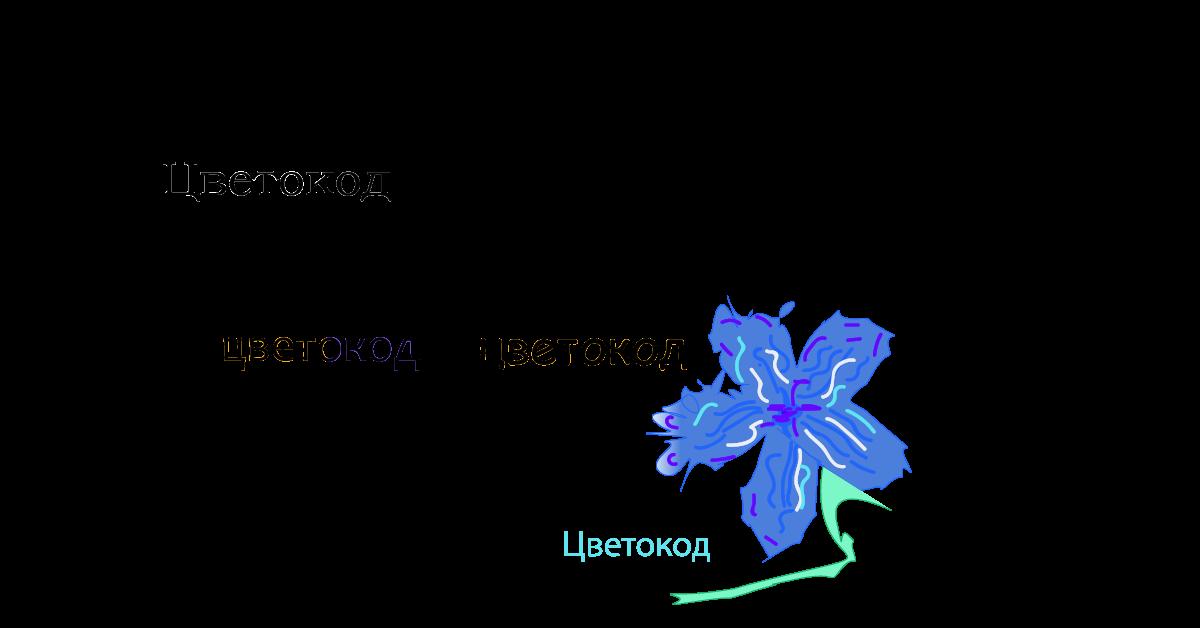 Логотип для ЦВЕТОКОД  фото f_3055d0637025251d.png
