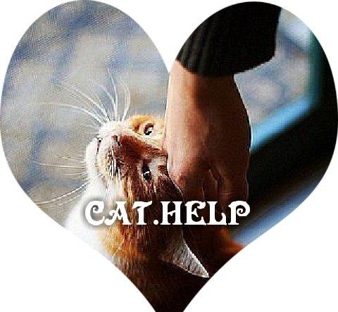 логотип для сайта и группы вк - cat.help фото f_34559d9dd95522a5.jpg