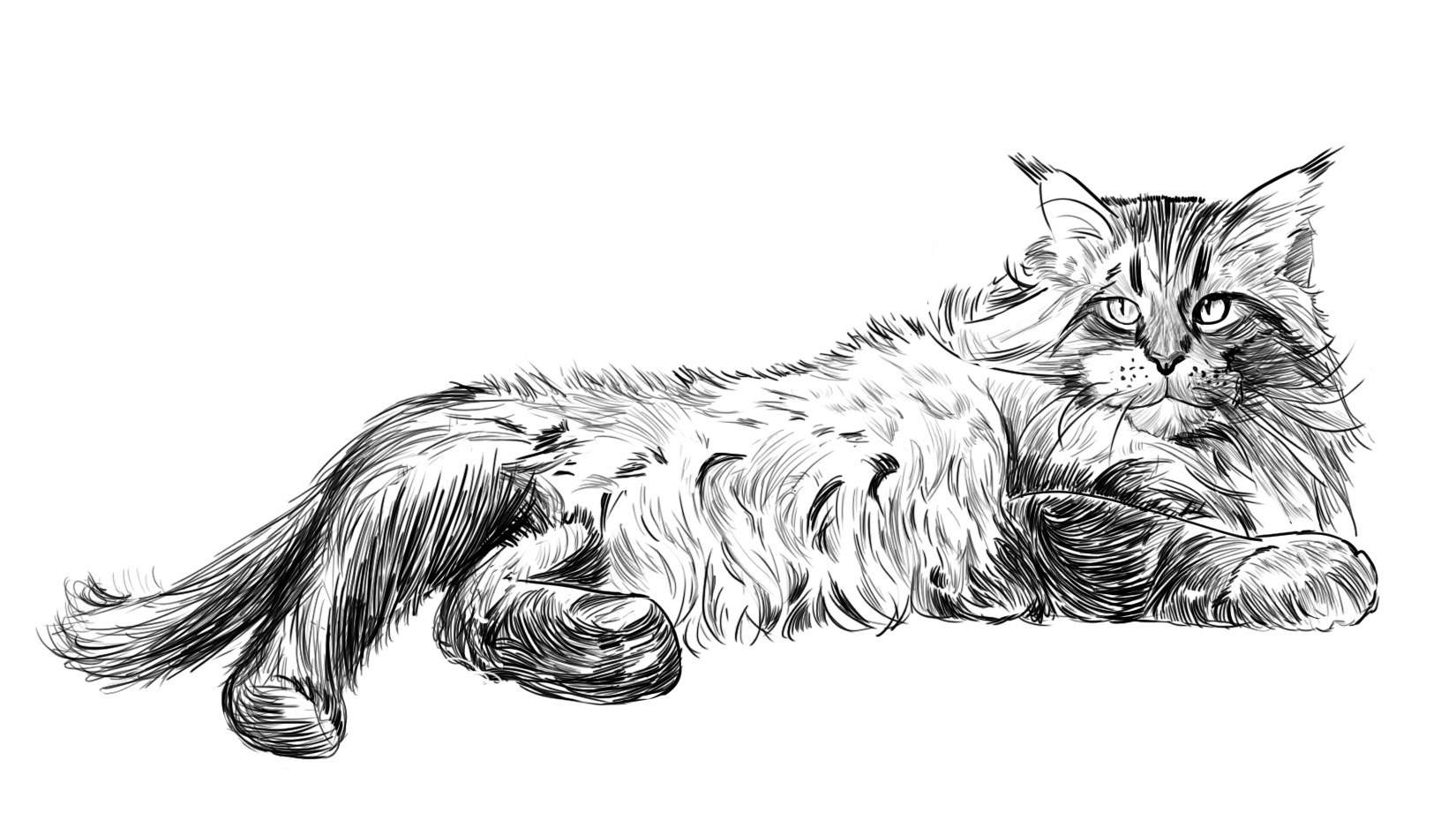 Рисунок кота для визитки
