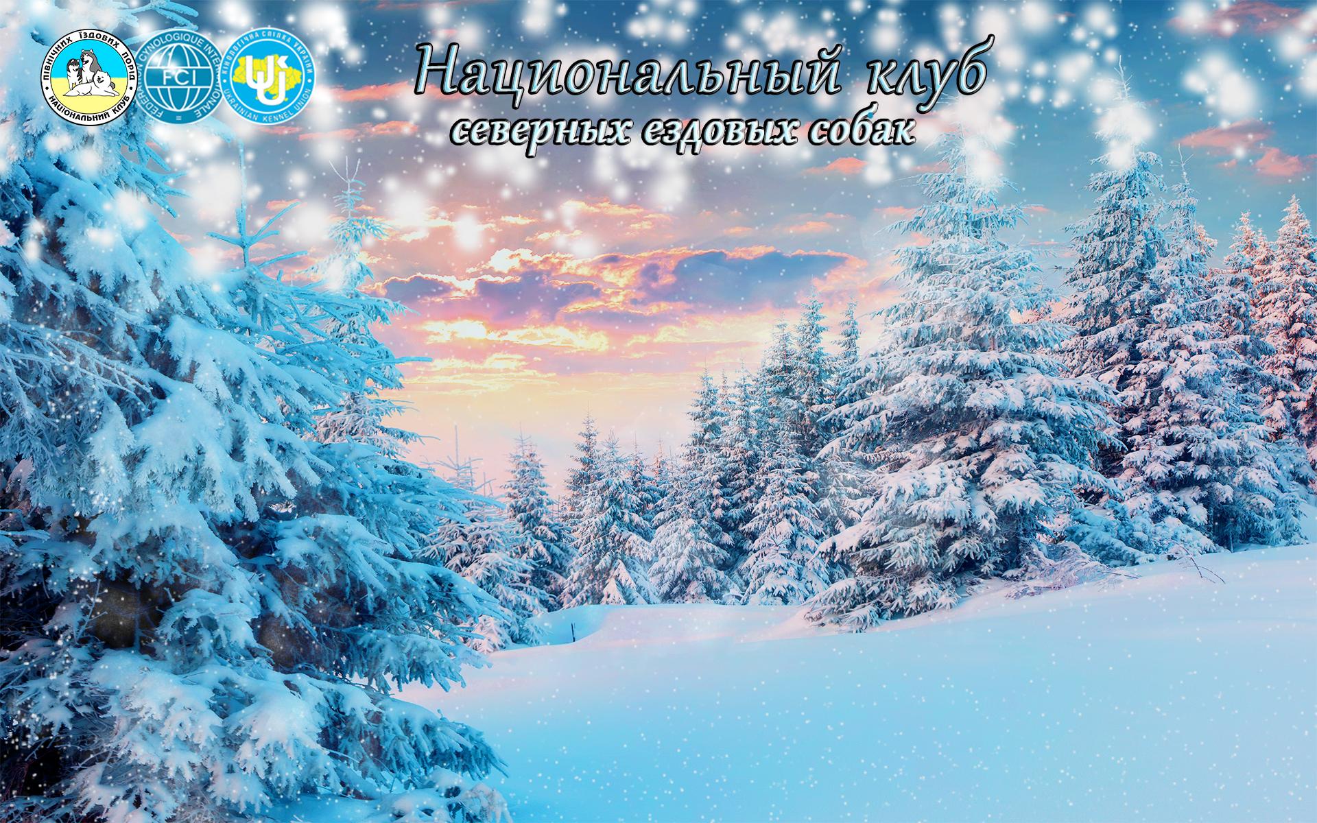 Зимний фон для сайта http://sleddogs.club/