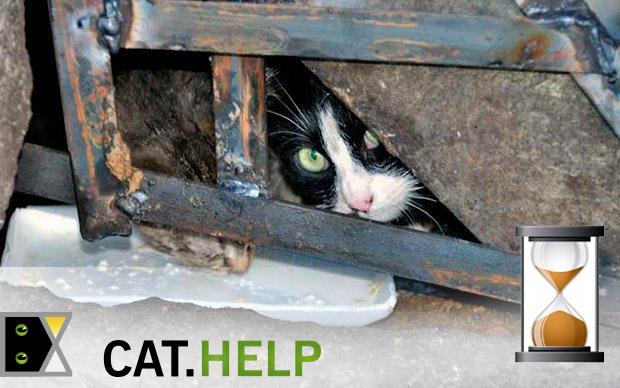 логотип для сайта и группы вк - cat.help фото f_39259e513d6c5a25.jpg