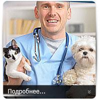 Ветеринарный центр - landing page