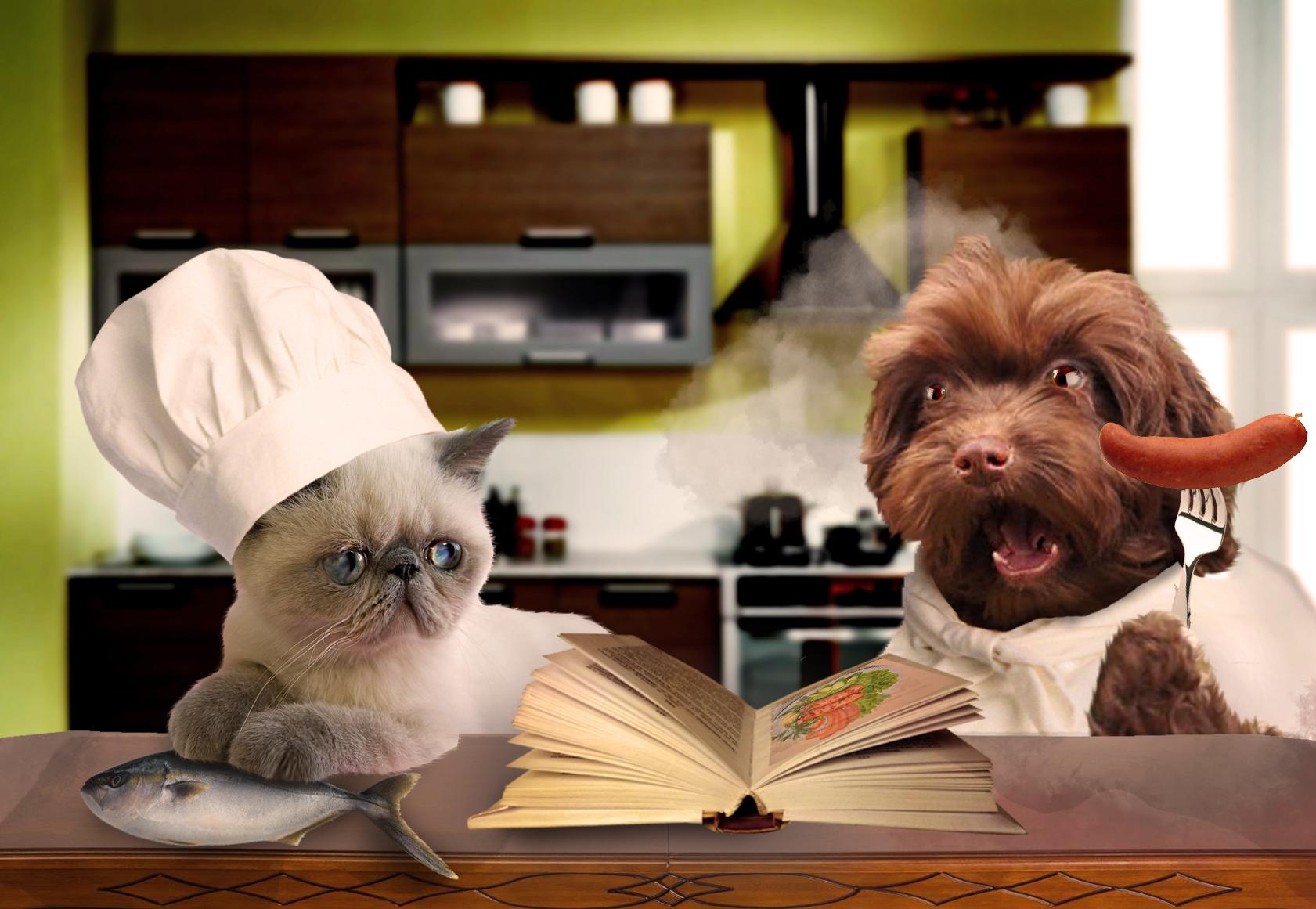 Создать интересный коллаж с участием животных фото f_88551d83e02d0bca.jpg