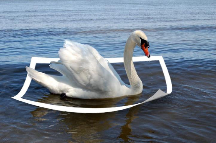 лебедь на заливе