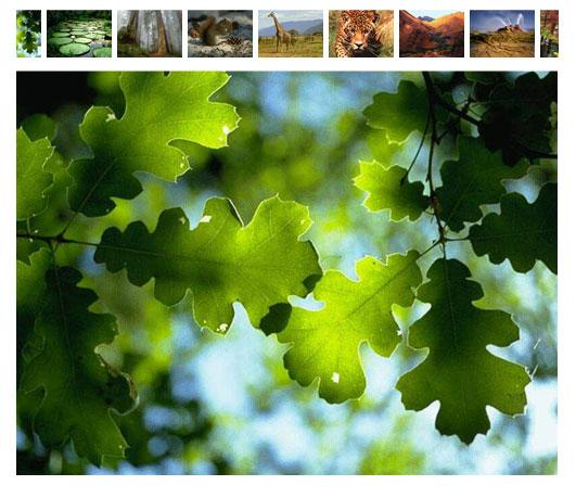 foto-gallery2