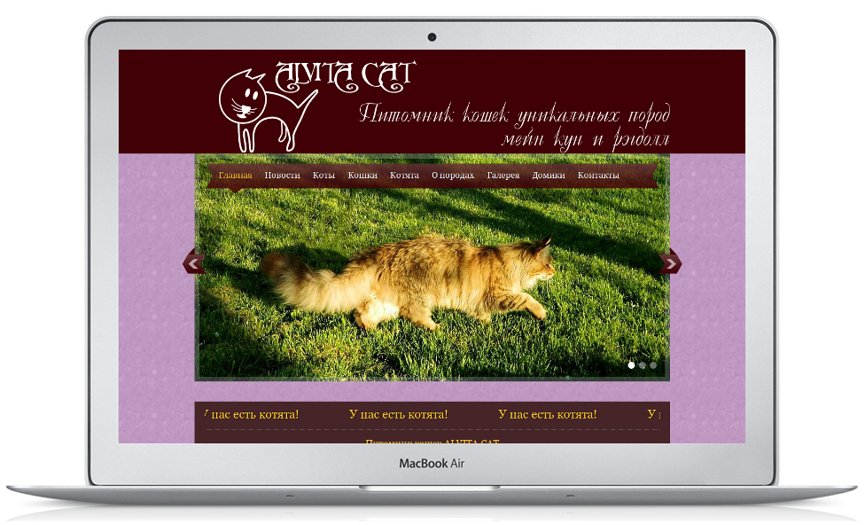 Питомник кошек AlvitaCat