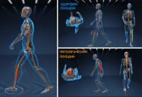 физиологическая 3D анимация