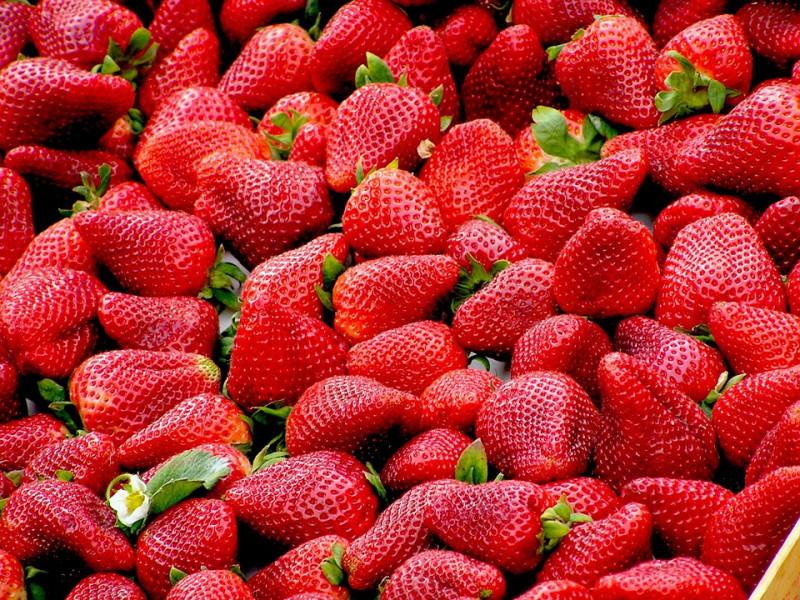 Написание  и публикация новостей для компании, занимающейся продажей ягод и саженцев
