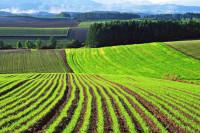 Статьи на сайт о фермерстве https://daferma.ru