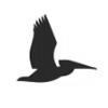 pelican-design